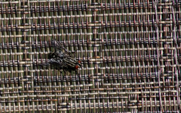 fly on chair