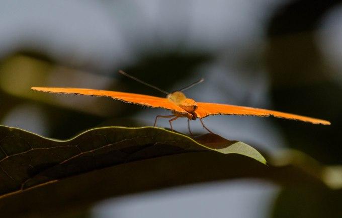 orange for take-off