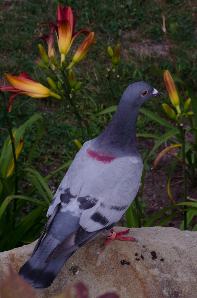 Stool Pigeon
