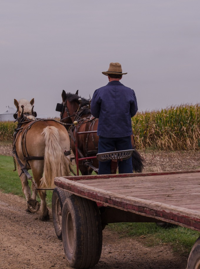 Amish Harvest Time