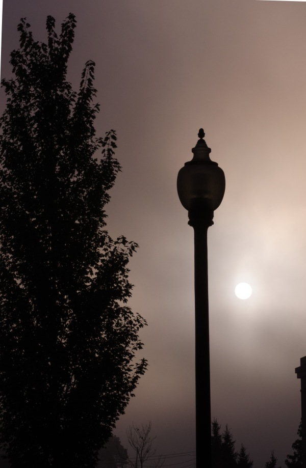 Tree, Lamp and Sun