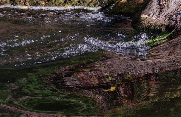 Backwater Swirl