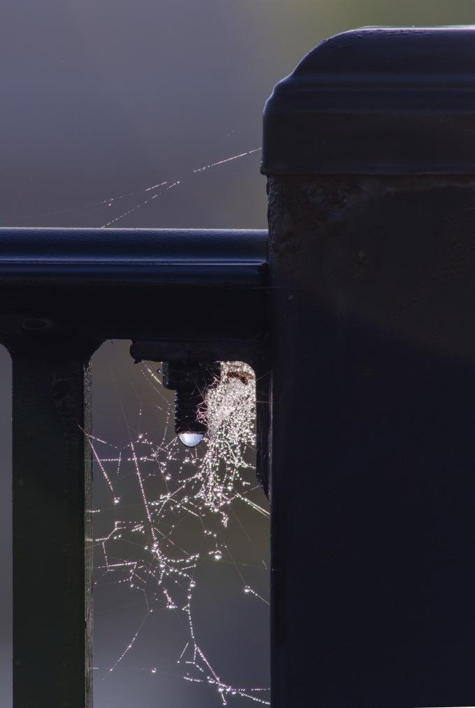 webs and bolt