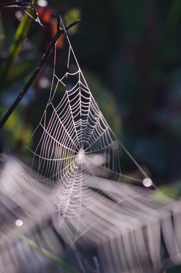 webs w red