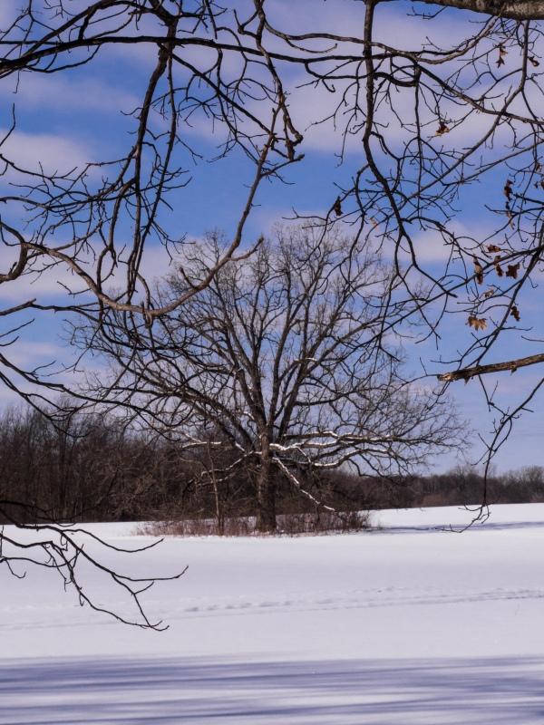 Tree in Field of Snow