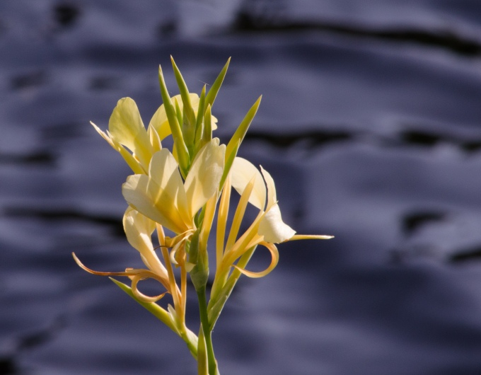 flower against water