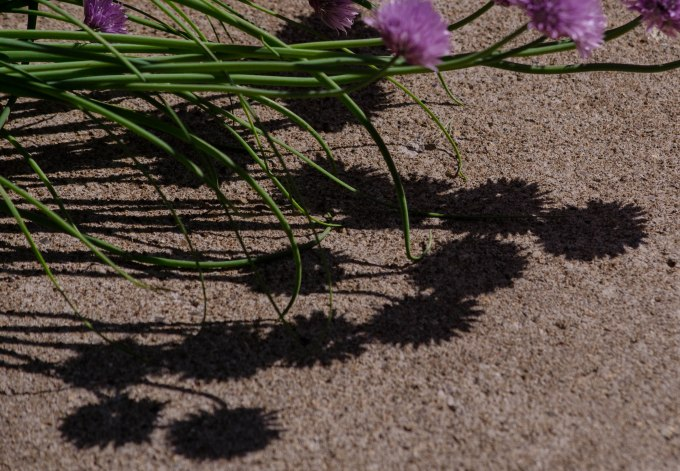 Chive Shadows
