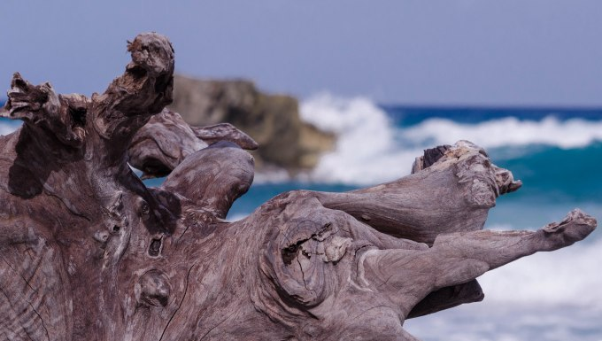 Driftwood and Sea