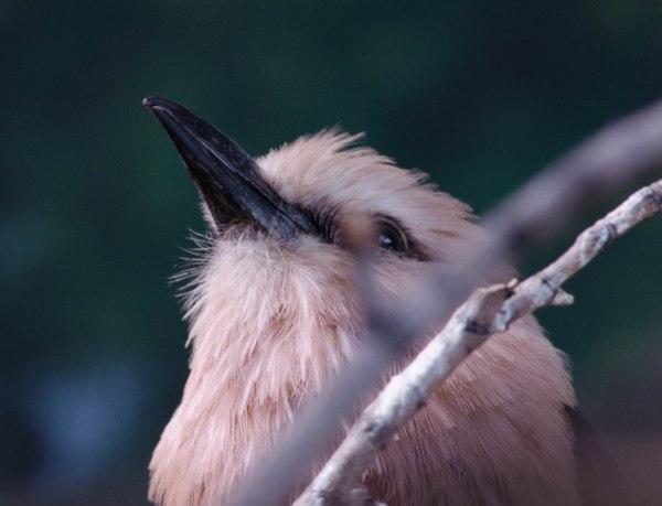 beak and eye
