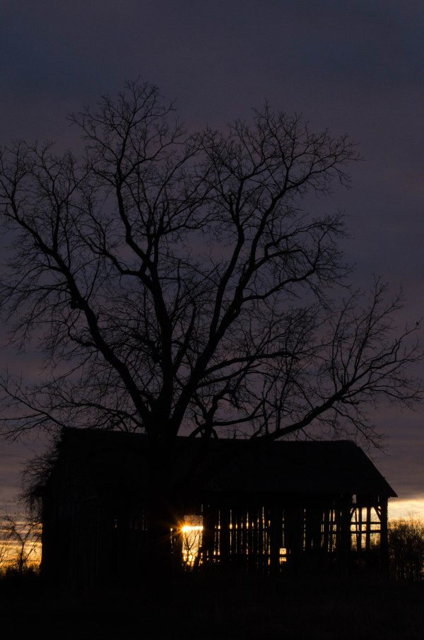Tree, Shed, and Sun