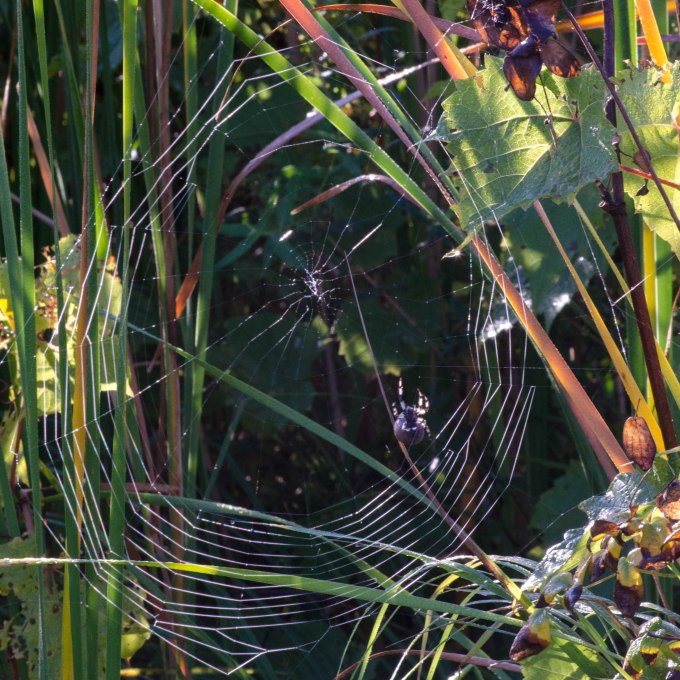 Web and Spider