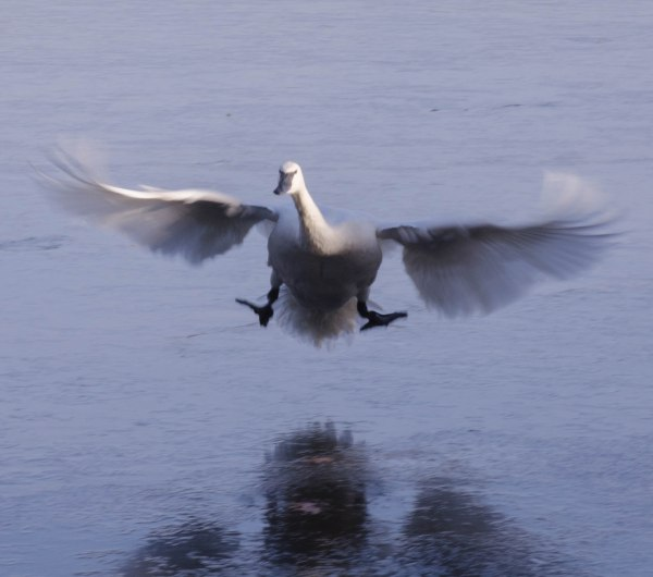 Slippery Landing