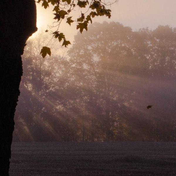 sunrise falling leaf