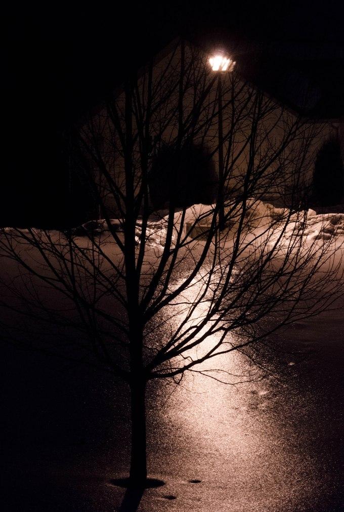 Tree and Streetlight