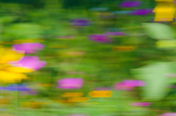 Wildflower Abstract