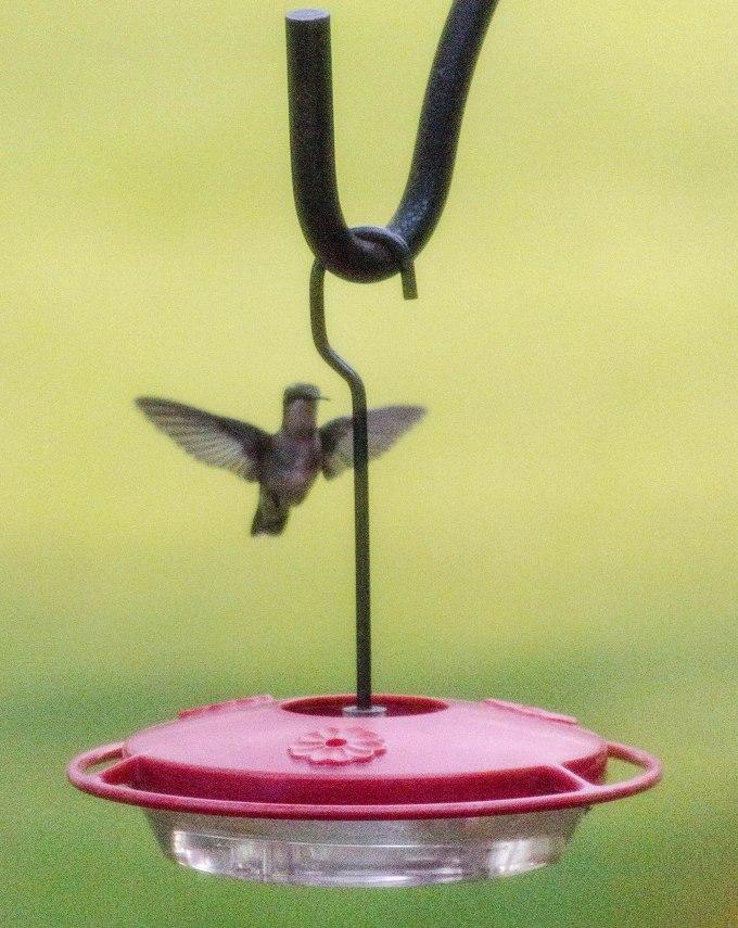 hbird flight