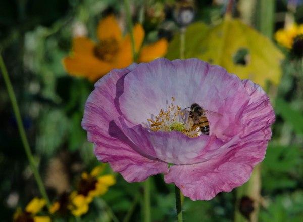 Poppy and Bee