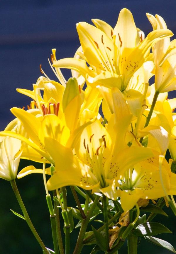 yellowjoy