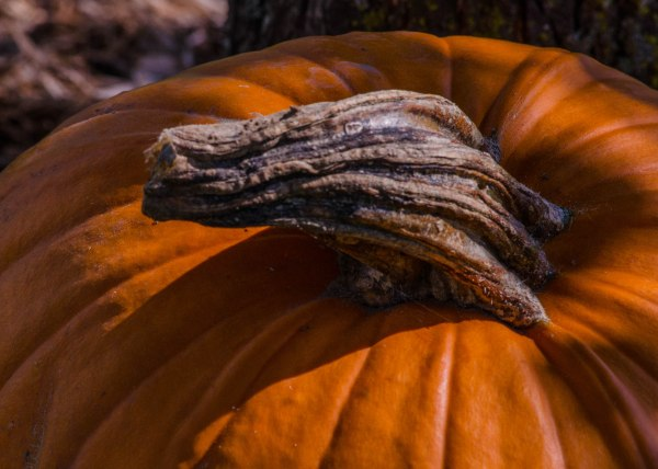 The Great Pumpkin stopped by for a close-up.