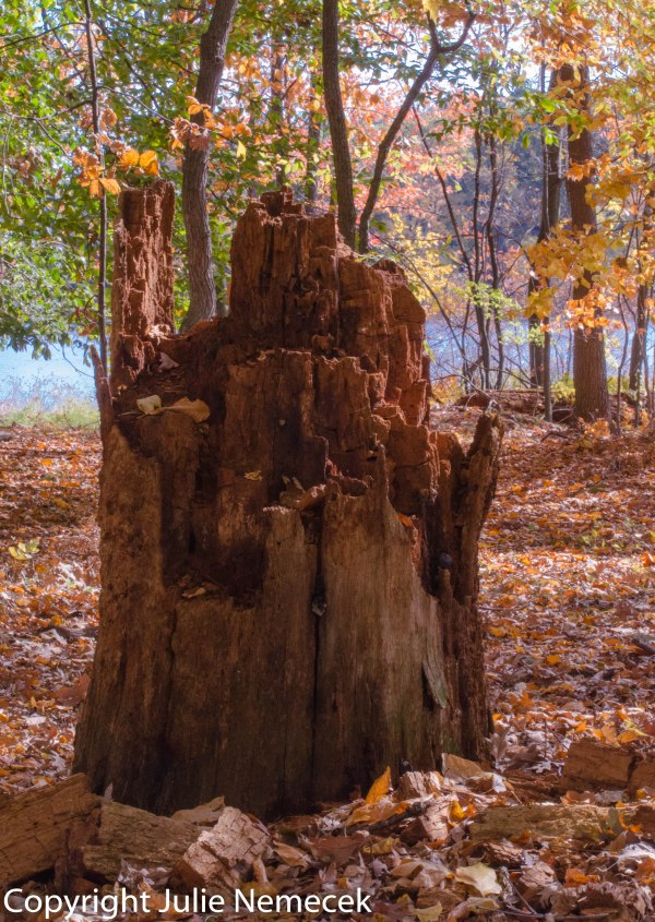 Stump in the Woods