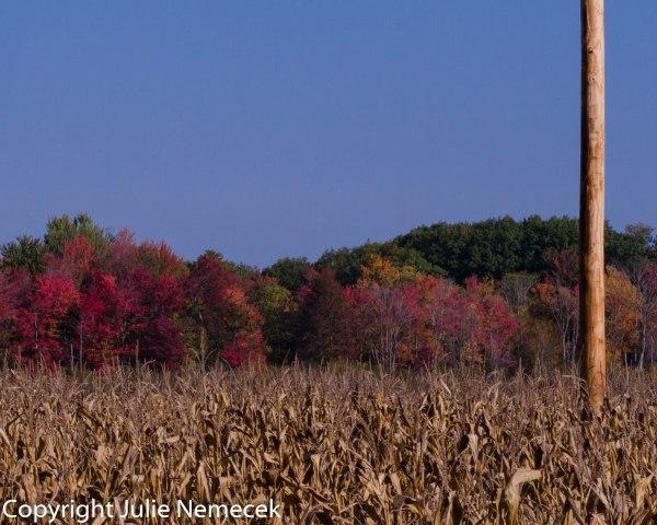 A new telephone pole adds to the Fall colors.