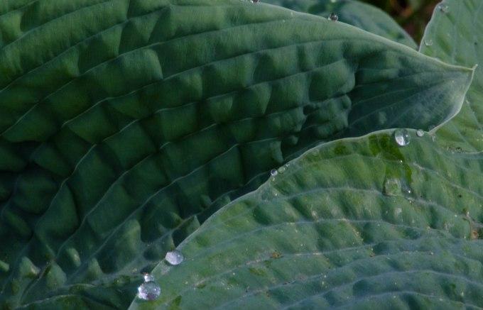 leafedge