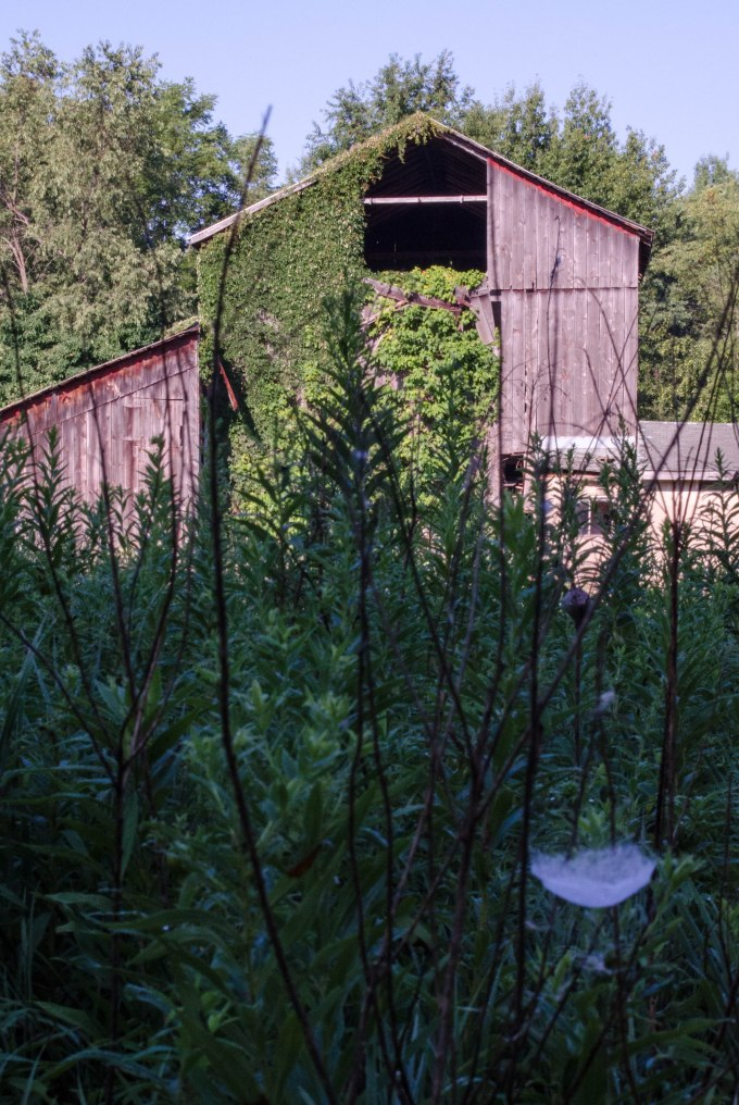 barn and web