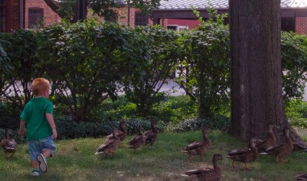 duck herder