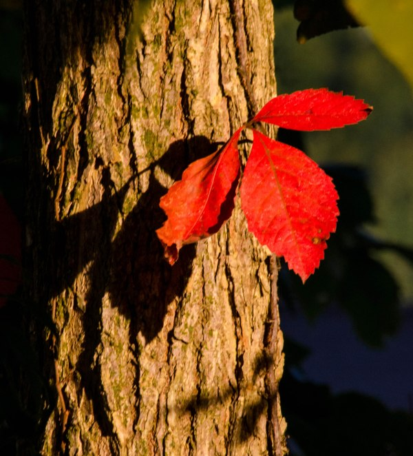 leaves-and-shadows