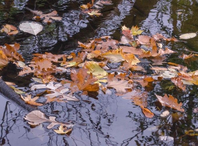 leavesadrift