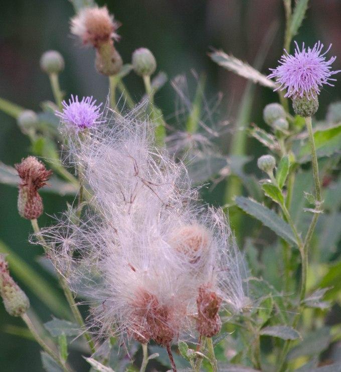flowertoweed