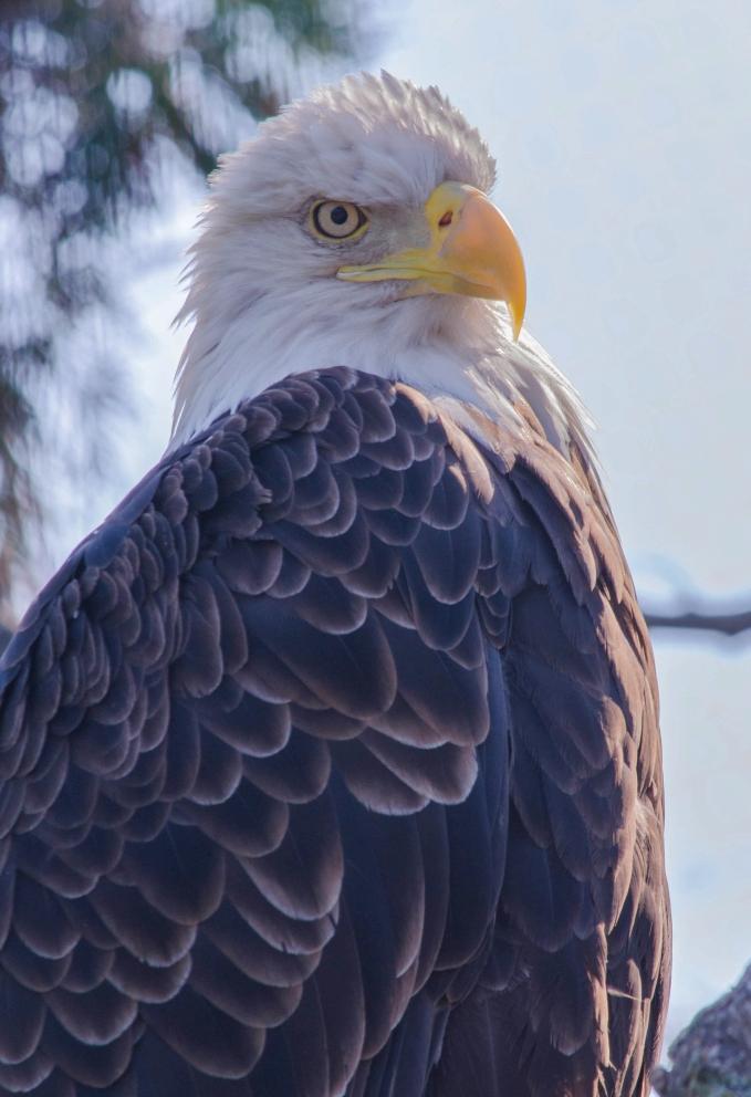 eagle toledo