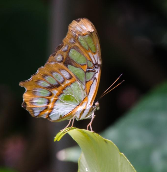 greenandorange
